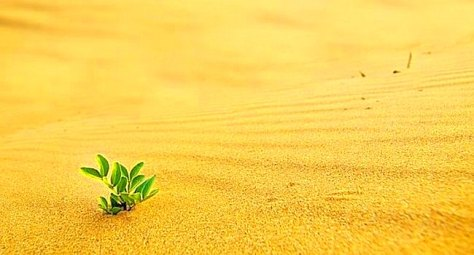 Green shoot in the desert - growth in adverse conditions